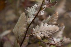 Fond de Tableau de feuilles d'automne et temps d'automne L'espace libre pour votre produit image stock