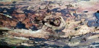 Fond de texture d'écorce d'arbre Photo stock