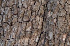 Fond de texture d'écorce d'arbre Fond texturisé Photographie stock