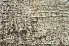 Fond de texture d'écorce d'arbre Photographie stock