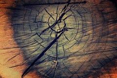 Fond de texture d'arbre Photos libres de droits