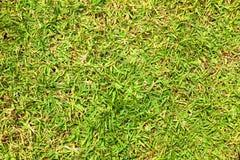 Fond de texture d'herbe Photos libres de droits