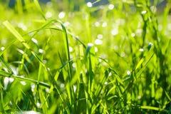 Fond de texture d'herbe verte Image stock