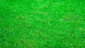 Fond de texture d'herbe verte image libre de droits