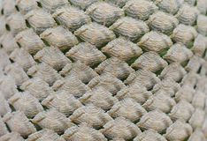 Fond de texture de cactus Images stock