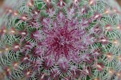 fond de texture de cactus Photos libres de droits