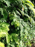 Fond de texture de feuilles Photo libre de droits