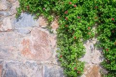 Fond de texture de mur avec des feuilles Images stock