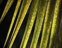 Fond de texture de palmettes de vert jaune Photos libres de droits