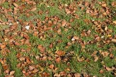 Fond de texture des feuilles tombées d'un peuplier Un tapis d'automne de feuillage photos libres de droits