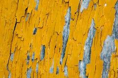 Fond de texture et de modèle de vieux mur en bois avec l'élevage de musroom Images stock