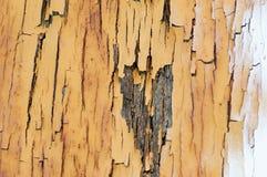Fond de texture et de modèle de vieux mur en bois avec l'élevage de musroom Photos stock