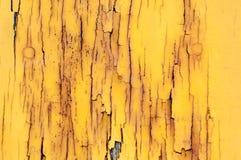 Fond de texture et de modèle de vieux mur en bois avec l'élevage de musroom Photo stock