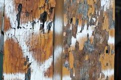 Fond de texture et de modèle de vieux mur en bois avec l'élevage de musroom Photographie stock libre de droits