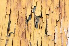 Fond de texture et de modèle de vieux mur en bois avec l'élevage de musroom Image stock