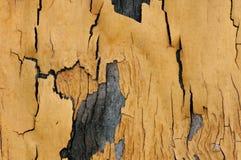 Fond de texture et de modèle de vieux mur en bois avec l'élevage de musroom Photo libre de droits