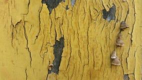 Fond de texture et de modèle de vieux mur en bois avec l'élevage de musroom Images libres de droits