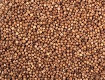 Fond de texture Graines de coriandre sèches Photographie stock