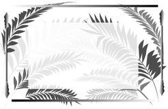 Fond de texture pour des invitations avec un cadre et des feuilles d'un palmier Photo libre de droits