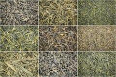 Fond de thé vert de feuilles mobiles Images stock