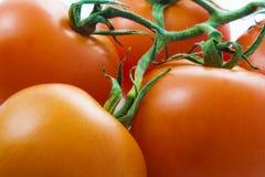 Fond de tomate Photographie stock libre de droits