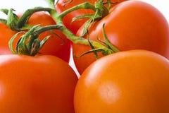 Fond de tomate Photo libre de droits