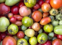Fond de tomates Images libres de droits