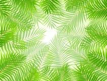 Fond de trame de palmier Image libre de droits