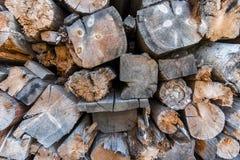 Fond de tronçon d'arbre Image libre de droits