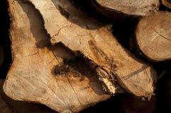 Fond de tronçon en nature Photos libres de droits
