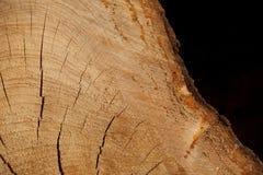 Fond de tronçon en nature Photo stock
