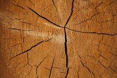 Fond de tronçon en nature Images libres de droits
