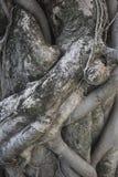 Fond de tronc d'arbre Photographie stock