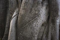 Fond de tronc d'arbre Photographie stock libre de droits