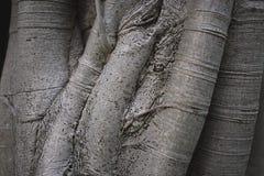 Fond de tronc d'arbre Image libre de droits