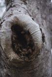 Fond de tronc d'arbre Image stock