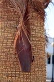 Fond de tronc de palmier Photos stock
