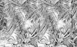 Fond de tronc de palmier Image libre de droits