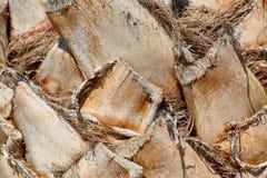 Fond de tronc de palmier, texture atural Photo libre de droits