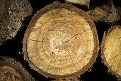 Fond de troncs Image libre de droits