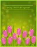 Fond de tulipes Photos stock