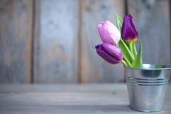 Fond de tulipes de ressort Image libre de droits