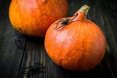 Fond de vacances de Halloween avec des potirons et des araignées noires dessus photo stock