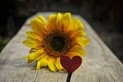 Fond de Valentine, coeur, jour de valentines, cadeau, fleur Image libre de droits