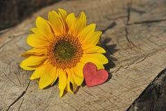 Fond de Valentine, coeur, jour de valentines, cadeau, fleur Photo stock