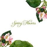 Fond de vecteur avec des fleurs de pommier d'aquarelle illustration de vecteur