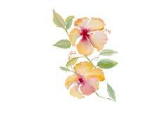Fond de vecteur d'aquarelle d'illustration de ketmie Image stock
