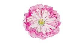 Fond de vecteur d'illustration d'aquarelle de Lotus Photos stock