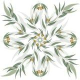 Fond de vecteur des feuilles et des graines d'eucalyptus Photo libre de droits