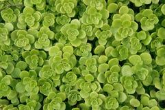 Fond de verdure Photo stock